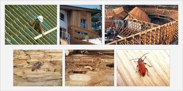 Консервантите за дървесина я защитават от вредители