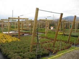 Импрегнирани струговани колове за градински център