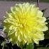 Слънчева градинка пред дома 3psb_3H