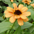 Слънчева градинка пред дома 3psb_3J
