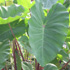 Слънчева градинка пред дома 3psb_3N
