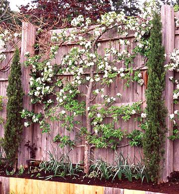 Обзавеждане и подредба на двора и градината! 05
