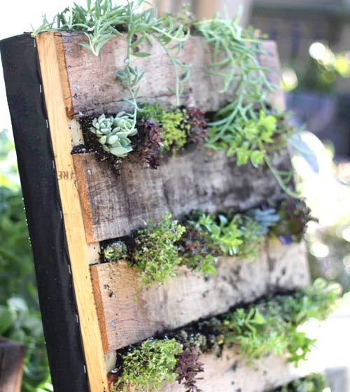 Вертикална градинка от дървени палета