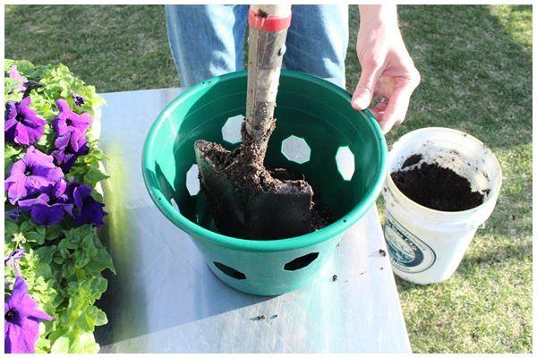 Как да засадим висящо цвете като истински професионалисти