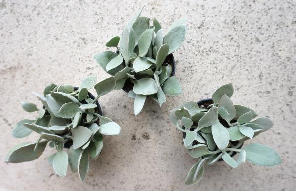 Как да си направите вертикална градина с бетонни блокчета