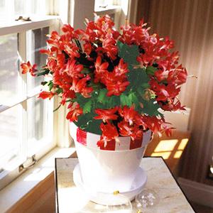 Домашни растения - Обичай природата