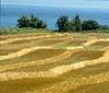 Пазарът на земеделска земя се раздвижва