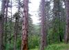 Шест пъти се вдигат цените за строеж в горите
