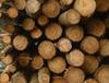 Добивът на дървесина води до 'въглероден дълг'