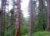 Обмисля се 50% от дървесината да се продават през стоковите борси