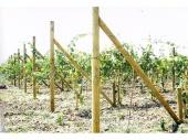 Дълготрайна защита на дървесина с Tanalith E